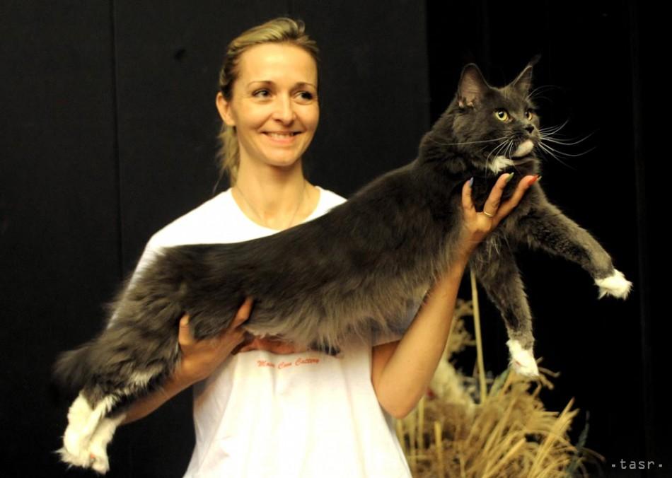 Výstava mačiek - Fotodenník - TERAZ.sk 7474e575214
