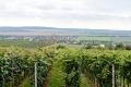 Na prenájom časti mestskej vinice v Bratislave vyhlásia verejnú súťaž