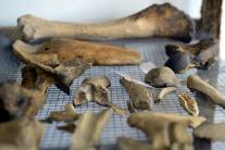 Archeologické nálezisko pri Budmericiach