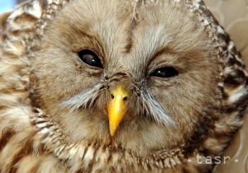 Nález zraneného či uhynutého chráneného živočícha treba nahlásiť