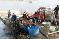 OBRAZOM: Na Perínskych rybníkoch lovia budúce vianočné kapry