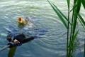 Výstava v Mestskom múzeu Zlaté Moravce predstaví Ryby našich vôd
