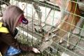Košice a Urbariát Kavečany sa dohodli na nevyberaní parkovného pri zoo