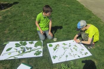 Inovátori môžu ekoinováciu prihlásiť do Zelenej letnej školy