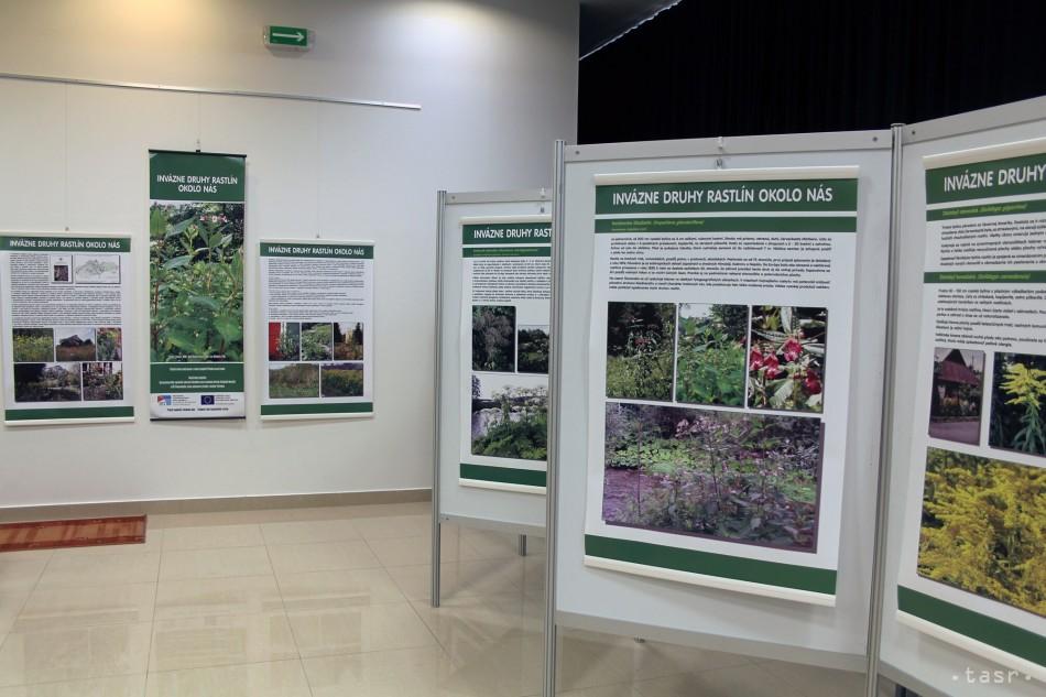 zápasu výrobu rastlín