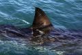 Turistov na pláži na Malorke vydesil žralok