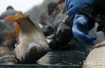 V USA vytláča ázijský kapor domáce druhy rýb