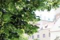Alergikov v Bratislave potrápia peľové zrná tráv aj lipy
