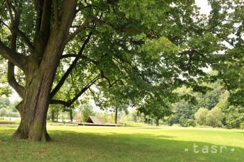Školy si v rámci celoslovenskej ankety Strom roka môžu skrášliť areál