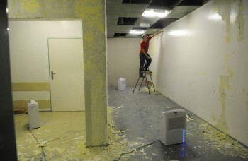 Šíria sa plesne: Vám nerastie nič na stene?