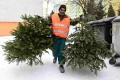 V Trnave začínajú od kontajnerov odvážať vianočné stromčeky