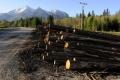 Brusel upozornil Slovensko na oblasť nezákonnej ťažby a predaja dreva
