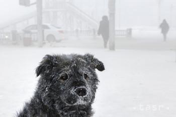 Pouličný pes sedí na ulici v ruskom meste Jakutsk na Ďalekom východe, kde teplota vzduchu klesla na mínus 50 stupňov Celzia v sobotu 16. januára 2021.