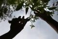 Správa mestskej zelene v Košiciach pokračuje s jesennou výsadbou