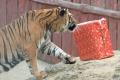 VIDEO: V košickej zoo Mikuláš rozdával darčeky deťom i zvieratám