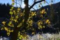 Po 40 rokoch sa bude dať prejsť celou roklinou Kyseľ v Slovenskom raji
