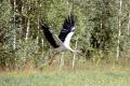 V Bielovežskom pralese sa začala ochranná operácia; hovorí sa o výrube
