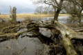 Na Slovensku vzniknú štyri chránené areály a jedna prírodná rezervácia