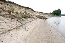 K brehom Dunaja sa po rokoch opäť vrátila brehuľa