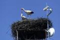 VStakčínskej Roztoke upravili 20-ročné bocianie hniezdo