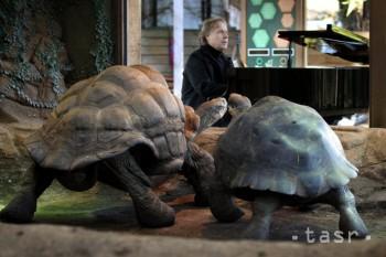 Hudba známeho klaviristu neprimäla galapágske korytnačky k páreniu