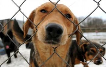 Aj vďaka Vám môžu mať opustené psíky krajšie Vianoce