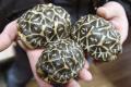 Levičania môžu pomôcť pri mapovaní nepôvodných druhov korytnačiek