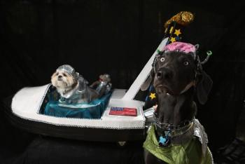 Najlepšie halloweenske kostýmy pre psov. Ktorý sa vám najviac páči?