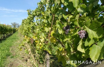 Malokarpatská vínna cesta: Slnko, víno a neopísateľná pohoda