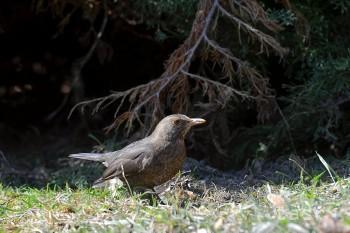 Cez víkend môžete absolvovať kurzy poznávania vtáčích hlasov v lese