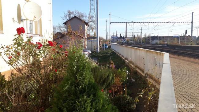 Takto vyzerá aktuálna fotka z 15. novembra – rozkvitnuté ruže v záhradách.  Foto  Teraz.sk - Márius Kopcsay f2ac8da4a44