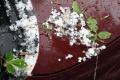 VIDEO: V Trebišove padali krúpy veľké ako čerešne