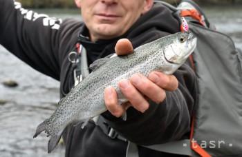 VIDEO: Súťaž v love rýb pod ľadom je populárna, zapojila sa aj žena