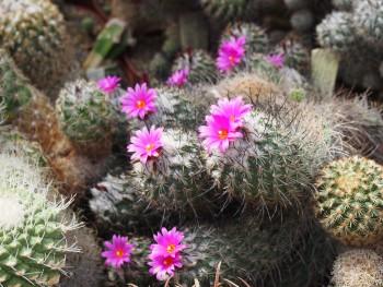Botanická záhrada UPJŠ pripravila výstavu sukulentov a kaktusov