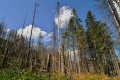 Lesníci odmietajú, že by lesov na Slovensku ubúdalo