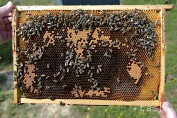 Pre lutilských včelárov bola sezóna priemerná, trápil ich úhyn včiel