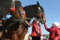 Cieľom Furmansko-remeselníckeho dňa v Lučenci je propagácia tradícií
