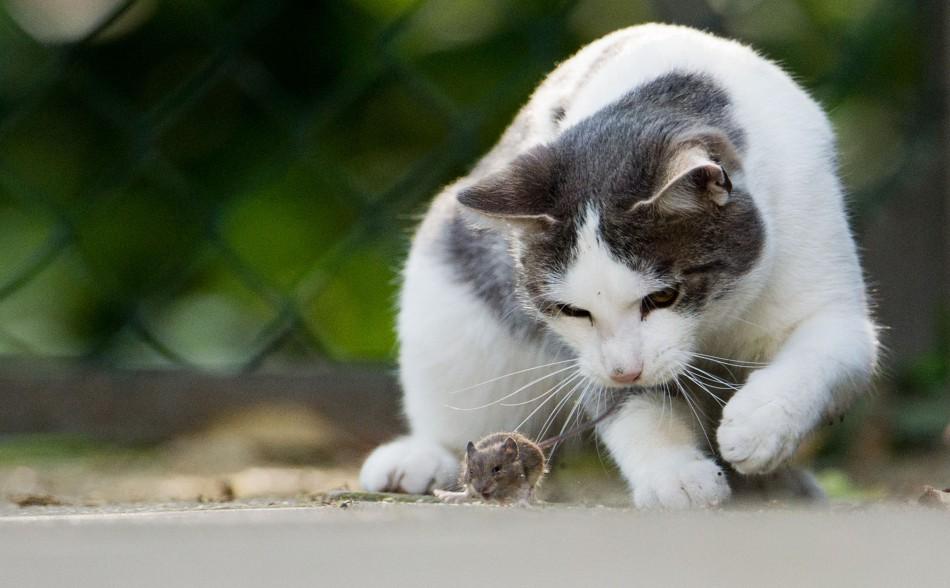 mačka - Fotodenník - SkolskyServis.TERAZ.sk 856bd55b947