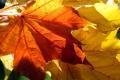 Jeseň sa vo Vysokých Tatrách prejavila pestrým sfarbením stromov