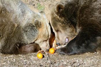 Košická Zoo mala v tohtoročnej sezóne rekordnú návštevnosť