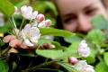 HUMENNÉ: V skanzene zasadili prvú jabloň medzinárodného projektu