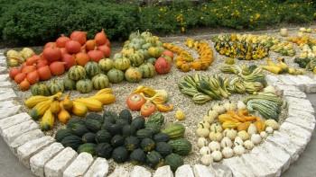 V Botanickej záhrade môžu návštevníci vidieť jesennú úrodu