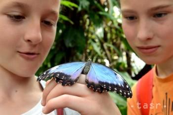 Motýle exotických trópov oslavujú desiaty ročník