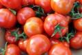 Slovenské cherry rajčiny z Babindolu získali Značku kvality SK Gold