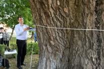 V Mestskom parku v Košiciach rastie vzácny strom - topoľ biely (Populus alba), má 150 rokov, obvod kmeňa 710 cm a výšku 27 metrov. Na snímke prof. Divós Ferenc zo Západomaďarskej univerzity v Šoproni skúma stabilitu stromu akustickým tomografom 3D. Košice, 25. mája 2016.