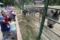 Deti počas prímestského tábora ošetrujú zvieratá a jazdia safari