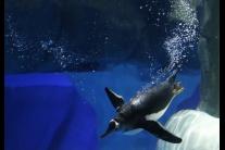 Novootvorená turistická atrakcia Ocean Park v Hong