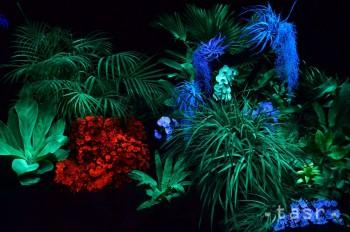 Košice: Botanickú záhradu rozžiarili magické svetielkujúce rastliny