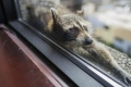Hrdina internetu: Medvedík čistotný vyliezol na 23-poschodovú budovu