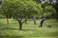 Ochranári vyzývajú ľudí k zlikvidovaniu inváznej zlatobyle